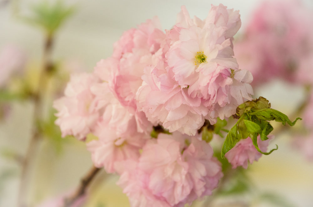 Cherry Blossoms - Recent Events with Catering by Seasons