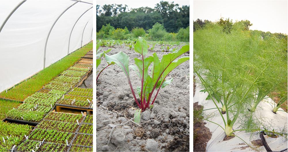 Produce - Groundworks Farm