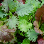 Tips for growing your own garden from Catering by Seasons