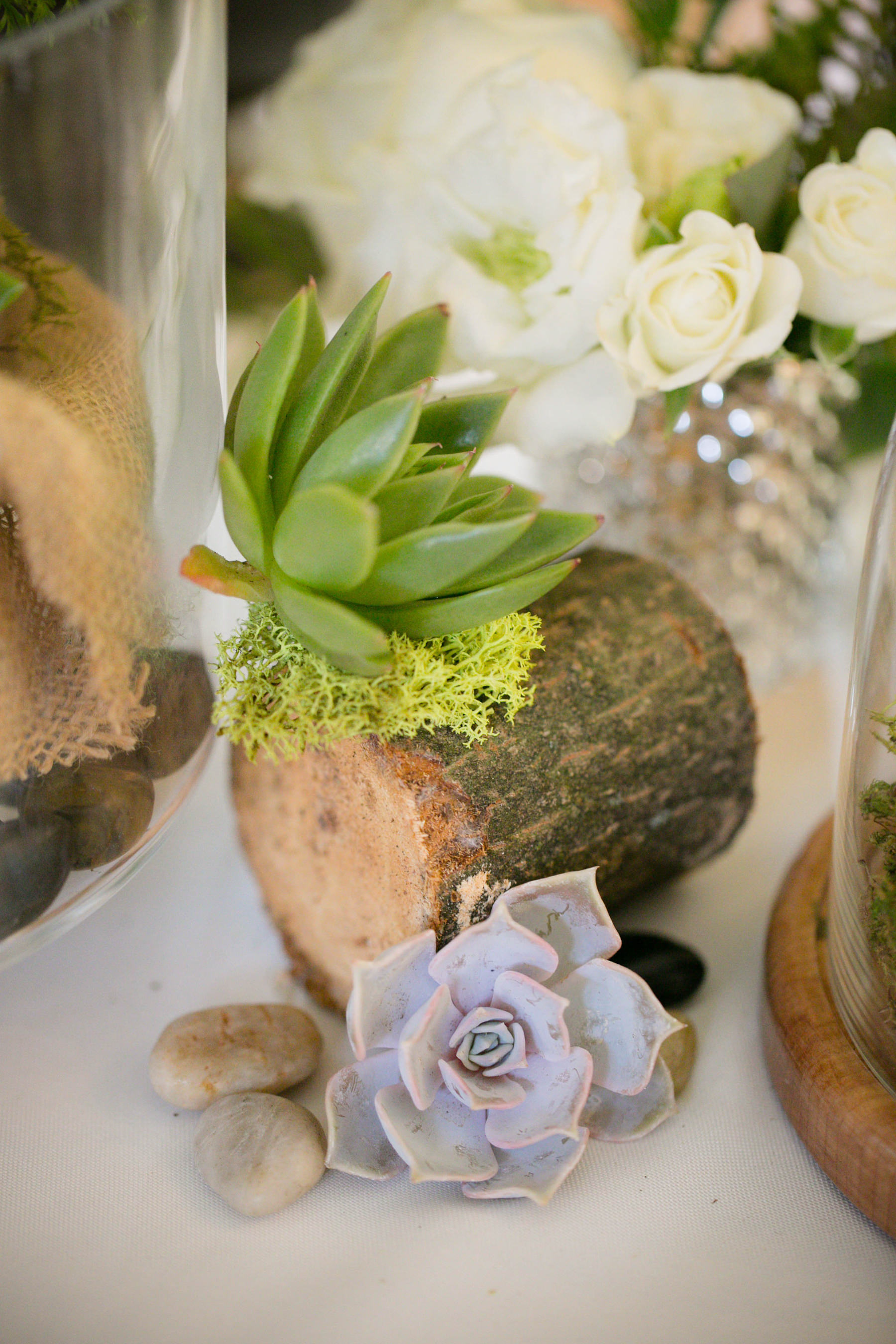 Rustic succulent centerpieces at Lauren and Josh's wedding